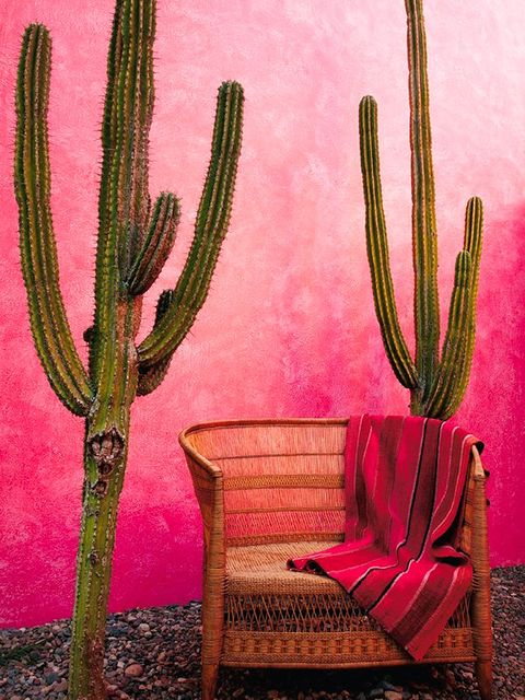 Furniture, Terrestrial plant, Cactus, Still life photography, Armrest, Caryophyllales, Thorns, spines, and prickles, Saguaro,