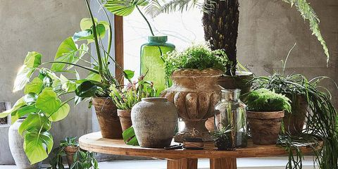 Flowerpot, Houseplant, Table, Tree, Plant, Tree stump, Branch, Furniture, Outdoor table, Floral design,