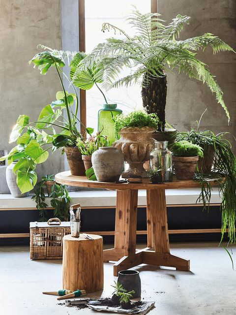 Houseplant, Flowerpot, Tree, Plant, Botany, Furniture, Vascular plant, Table, Interior design, Branch,