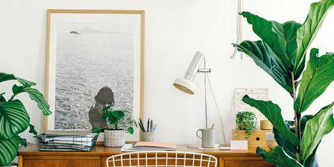 Green, Flowerpot, Furniture, Houseplant, Table, Room, Interior design, Desk, Turquoise, Plant,