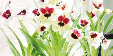 Flower, Flowerpot, Plant, Houseplant, Flowering plant, Tulip, Artificial flower, Grass, Cut flowers, Floristry,