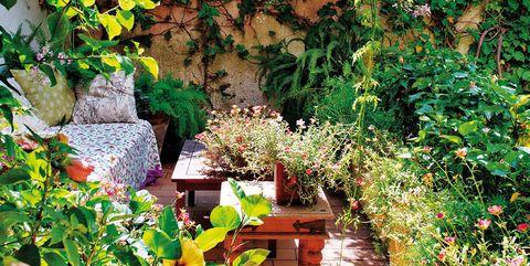 Plant, Garden, Flower, Botany, Spring, Grass, Herb, Landscape, Groundcover, Shrub,