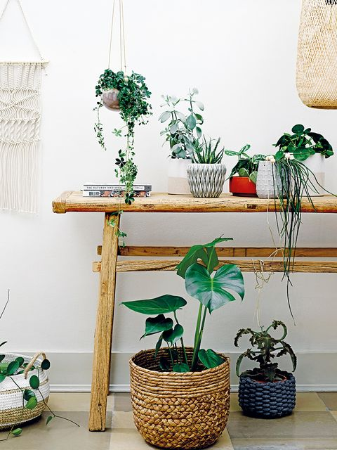 Green, Houseplant, Flowerpot, Table, Furniture, Shelf, Room, Interior design, Plant, Flower,