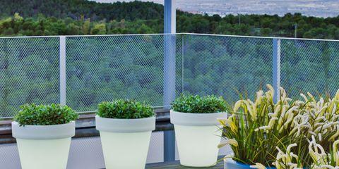 Plant, Flowerpot, Shrub, Interior design, Home fencing, Fence, Houseplant, Annual plant, Cylinder, Mesh,