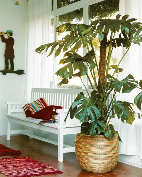 Houseplant, Room, Furniture, Living room, Interior design, Leaf, Plant, Tree, Chair, Flower,