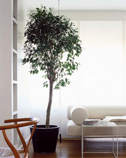 White, Houseplant, Flowerpot, Tree, Room, Plant, Interior design, Furniture, Woody plant, Living room,
