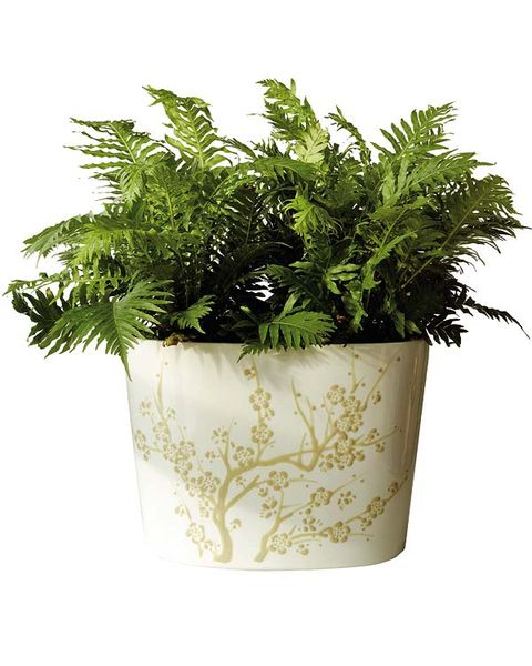 Flowerpot, Plant, Flower, Vascular plant, Herb, Leaf, Houseplant, Fern, Flowering plant, Grass,