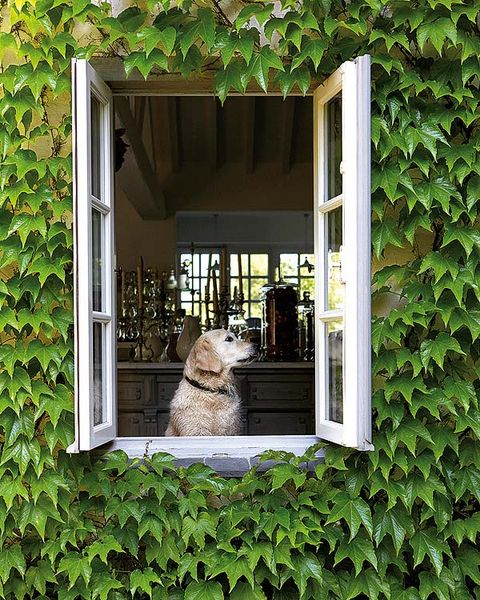 Green, Window, House, Ivy, Plant, Fawn, Building, Shrub, Outdoor structure,