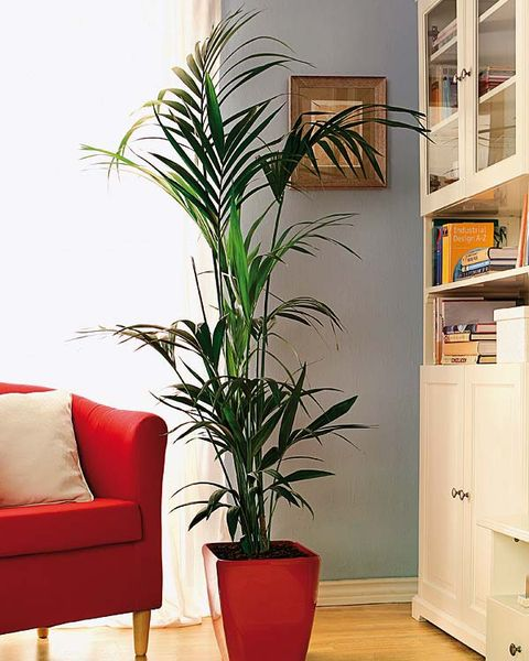 Houseplant, Flowerpot, Plant, Flower, Room, Furniture, Tree, Interior design, Yucca, Arecales,