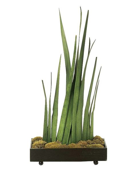 Plant, Grass, Flowerpot, Grass family, Aquarium decor, Houseplant, Flower, Flowering plant,