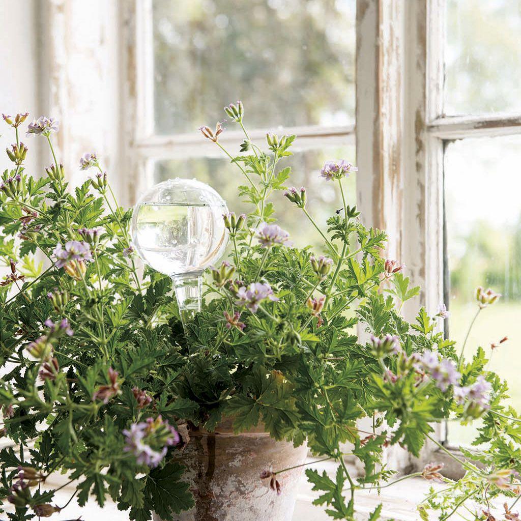 Plantas De Interior El Lillium Y Otras Flores Para Tener En Casa
