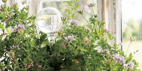 Plant, Flower, Botany, Flowering plant, Herb, Window, Spring, Flowerpot, Room, Houseplant,
