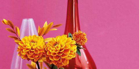 Serveware, Petal, Flower, Dishware, Centrepiece, Bouquet, Glass, Artifact, Produce, Natural foods,