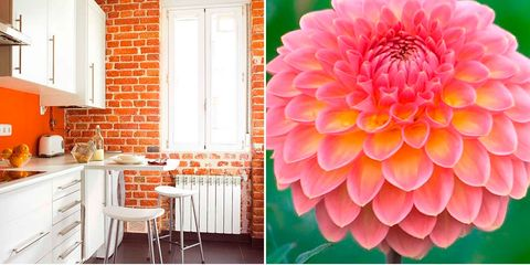 Orange, Pink, Room, Yellow, Peach, Interior design, Flower, Furniture, Plant, Table,