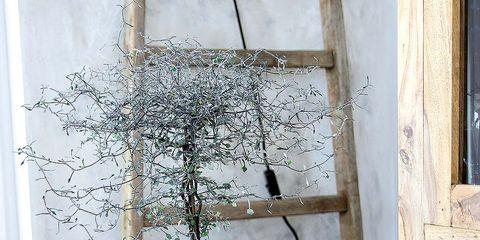 Branch, Twig, Flowerpot, Fixture, Door, Home door, Door handle, Still life photography, Plywood, Artifact,