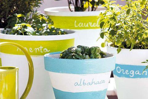 macetas con hierbas aromáticas