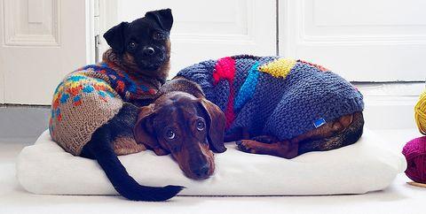 perritos con abrigo