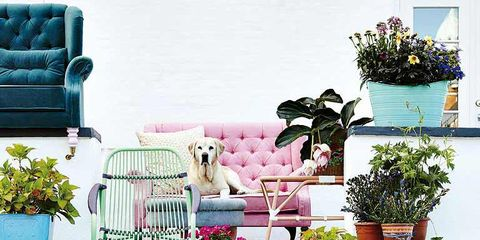 Blue, Flowerpot, Plant, Furniture, Pink, Purple, Interior design, Turquoise, Houseplant, Teal,