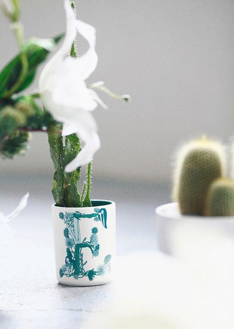 Green, Botany, Still life photography, Flowerpot, Plant stem, Porcelain, Ceramic, Houseplant, Pottery, Vase,