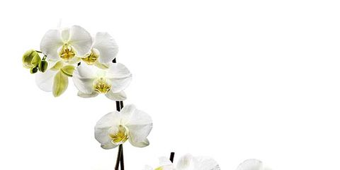Flowerpot, Petal, Flower, Flowering plant, Botany, Terrestrial plant, Houseplant, Interior design, Vase, Artificial flower,