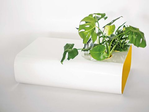 Green, Plant, Leaf, Flowerpot, Herb, Leaf vegetable, Vegetable, Vegetarian food, Houseplant, Rectangle,