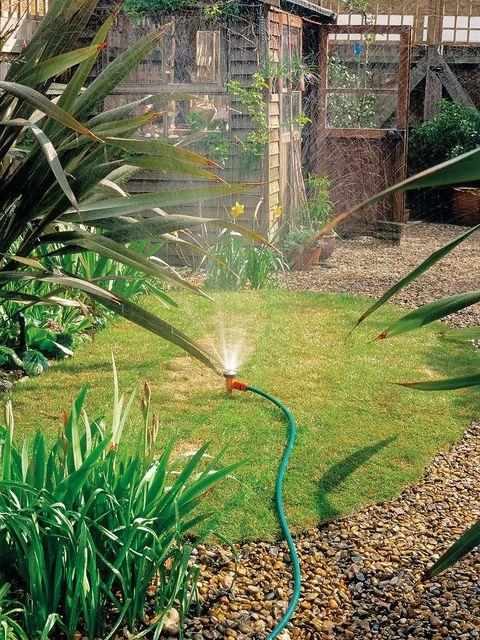 Grass, Vegetation, Grass family, Botany, Plant, Irrigation sprinkler, Garden, Tree, Yard, Terrestrial plant,