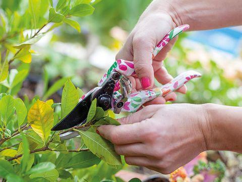 Hand, Finger, Nail, Plant, Flower, Leaf, Adaptation, Shrub,