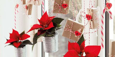 Red, Poinsettia, Christmas decoration, Gift wrapping, Flower, Plant, Christmas ornament, Present, Tree, Christmas,