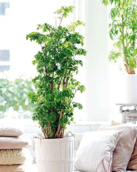 Plantas resistentes las reinas de la casa for Plantas decorativas resistentes