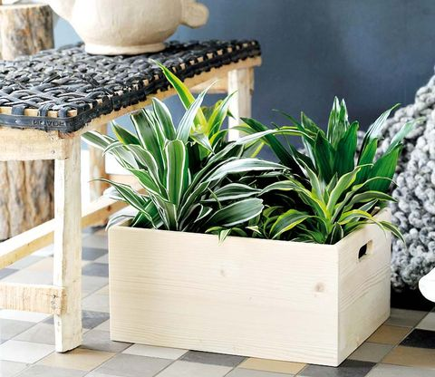 Flowerpot, Houseplant, Plant, Furniture, Tile, Wall, Table, Room, Grass, Wood,