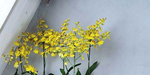 Flowerpot, Plant, Yellow, Flower, Flowering plant, Interior design, Houseplant, Vase, Artifact, Linens,