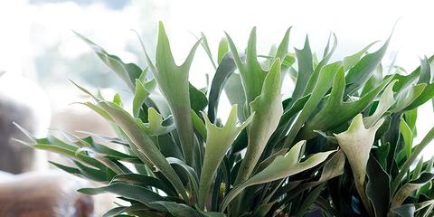 Flowerpot, Leaf, Botany, Terrestrial plant, Interior design, Vase, Artifact, Houseplant, Pottery, Still life photography,