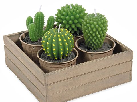 Green, Plant, Flowerpot, Terrestrial plant, Houseplant, Thorns, spines, and prickles, Cactus, Annual plant, Caryophyllales,