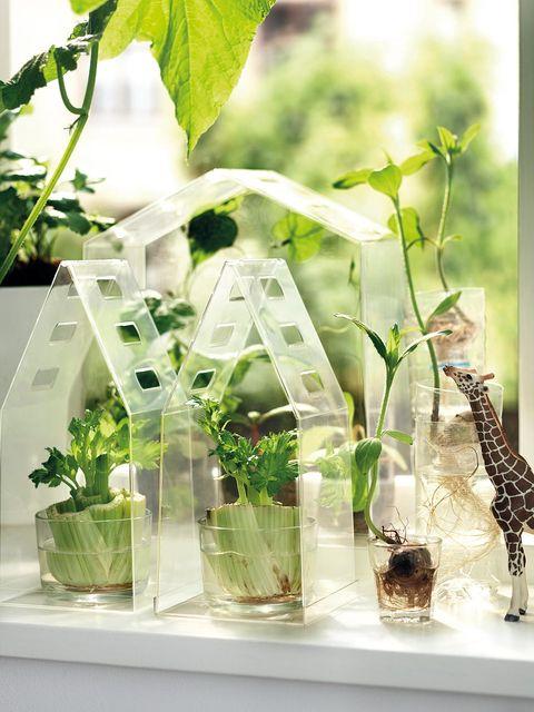 Glass, Giraffe, Giraffidae, Twig, Vase, Artifact, Plant stem, Transparent material, Flower Arranging, Annual plant,