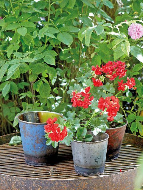 Flowerpot, Plant, Flower, Petal, Flowering plant, Garden, Interior design, Shrub, Annual plant, Houseplant,