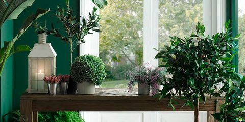 Houseplant, Green, Flowerpot, Room, Floor, Furniture, Plant, Architecture, Home, Garden,