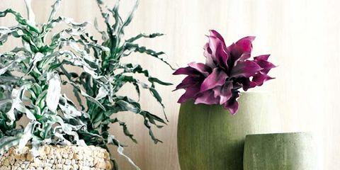 Petal, Flower, Purple, Terrestrial plant, Flowering plant, Plywood, Herb, Houseplant, Annual plant, Ladder,