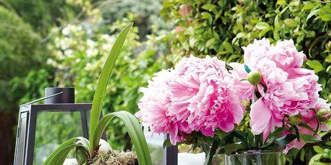 Petal, Flower, Artifact, Flowering plant, Vase, Interior design, Flower Arranging, Flowerpot, Centrepiece, Floristry,