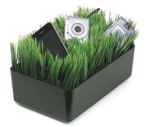 Grass, Green, Grass family, Wheatgrass, Ingredient,
