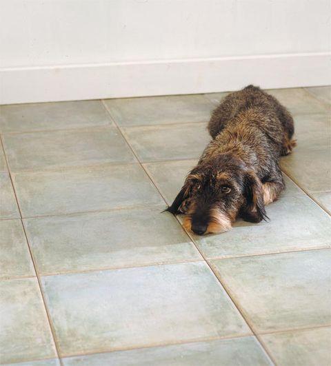 Floor, Brown, Flooring, Dog breed, Carnivore, Dog, Tile, Tile flooring, Liver, Snout,