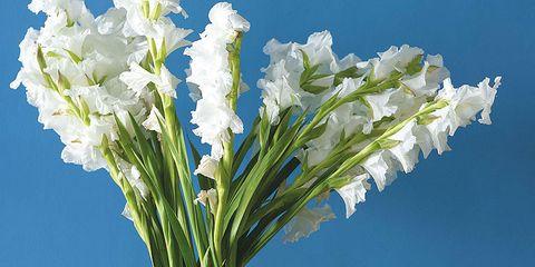 Blue, Yellow, Flower, Artifact, Interior design, Bouquet, Vase, Cut flowers, Majorelle blue, Still life photography,