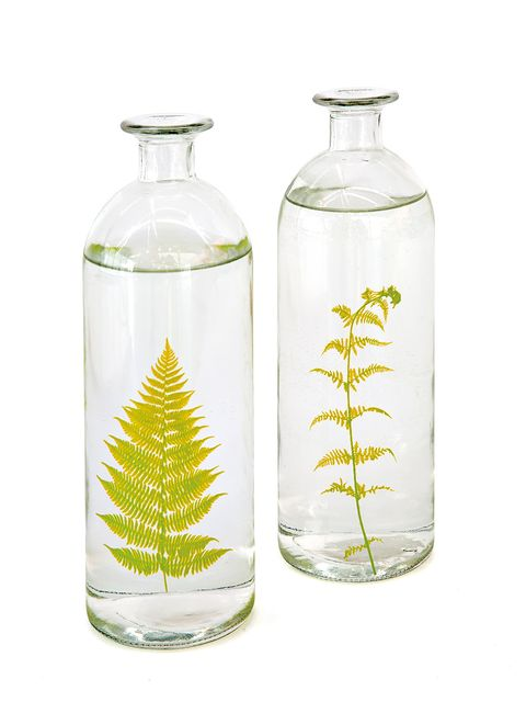 Product, Bottle, Leaf, Glass, Tree, Plant, Glass bottle, Cylinder, Vascular plant, Pine family,
