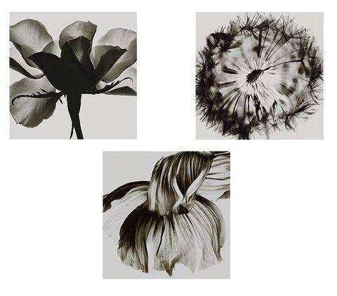 Style, Petal, Monochrome photography, Black-and-white, Botany, Art, Flowering plant, Illustration, Drawing, Painting,
