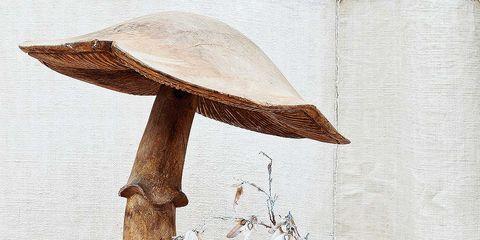 Wood, Wall, Still life photography, Mushroom, Trunk, Grey, Ingredient, Beige, Bolete, Peach,