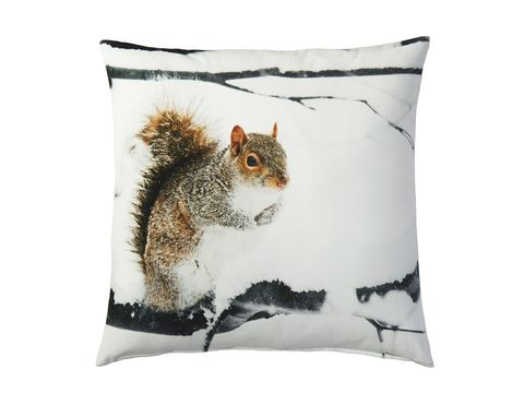 Organism, Adaptation, Squirrel, Rodent, Terrestrial animal, Fox squirrel, Throw pillow, Tail, ground squirrels, Home accessories,
