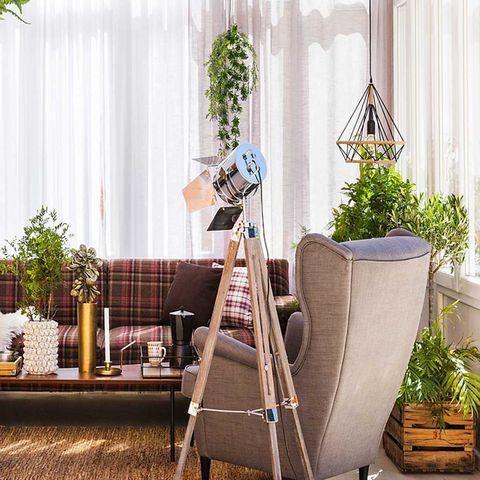 Flowerpot, Camera accessory, Interior design, Tripod, Houseplant, Cameras & optics, Camera, Window treatment, Herb, Window covering,