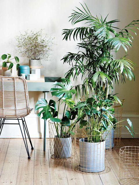 Green, Room, Interior design, Interior design, Flowerpot, Teal, Houseplant, Turquoise, Vase, Basket,