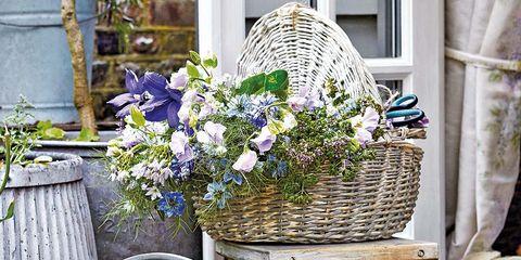 Flowerpot, Flower, Wicker, Plant, Chair, Watering can, Yard, Table, Floristry, Garden,