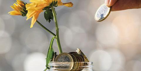Sunflower, Mason jar, Flower, Yellow, sunflower, Plant, Sunflower seed, Calendula, Petal, Cut flowers,