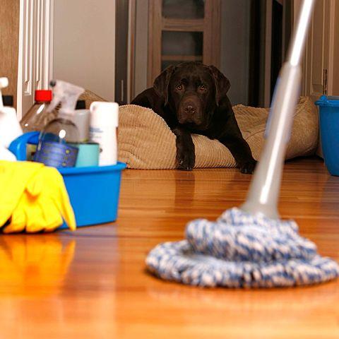 Floor, Flooring, Dog breed, Dog, Carnivore, Dog supply, Plastic, Household supply, Sporting Group, Pet supply,